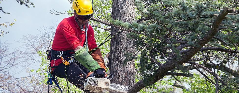 Зрізання та видалення дерев. Кривий Ріг.